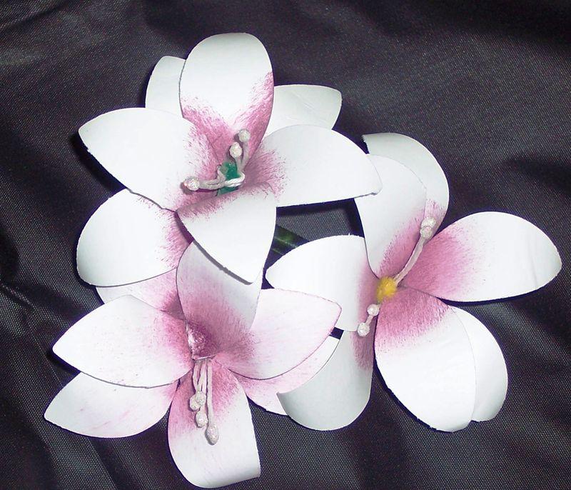 Flower Class mar 2011 amarillis